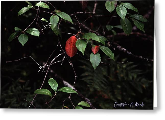 Greeting Card featuring the digital art Red Leaf by Christopher Meade