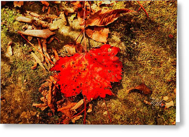 Red Leaf On Mossy Rock Greeting Card
