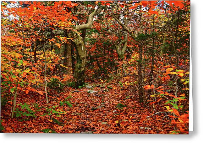 Greeting Card featuring the photograph Red Oaks And At Blaze Horizontal by Raymond Salani III