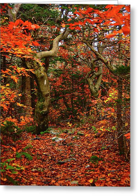 Greeting Card featuring the photograph Red Oaks And At Blaze Vertical by Raymond Salani III