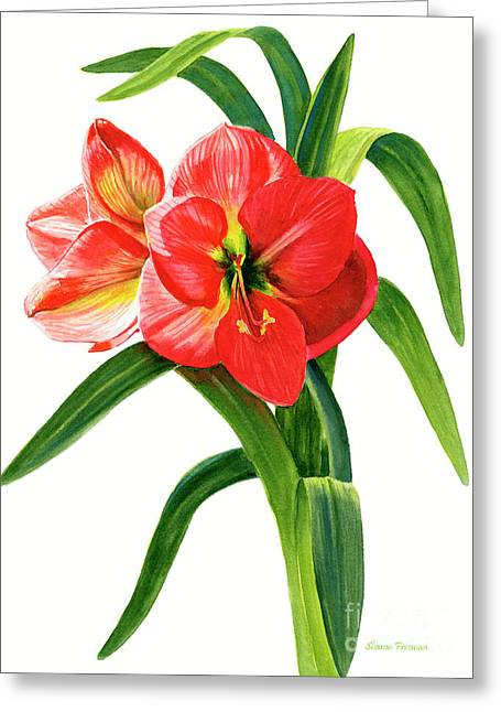 Red-orange Amaryllis Greeting Card