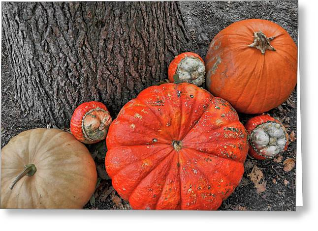 Red Orange Greeting Card by JAMART Photography