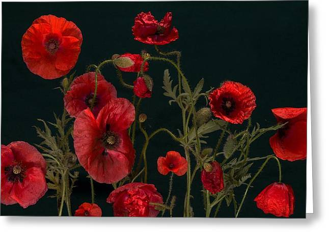 Red Poppies On Black Greeting Card