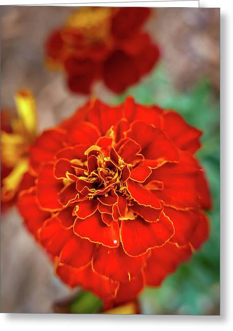 Red Summer Flowers Greeting Card