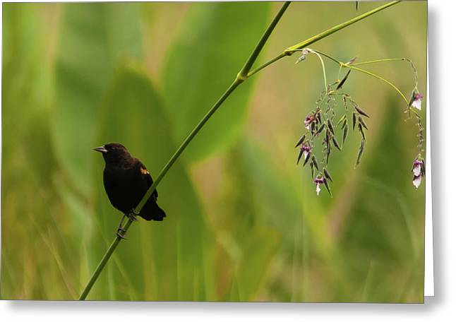 Red-winged Blackbird On Alligator Flag Greeting Card