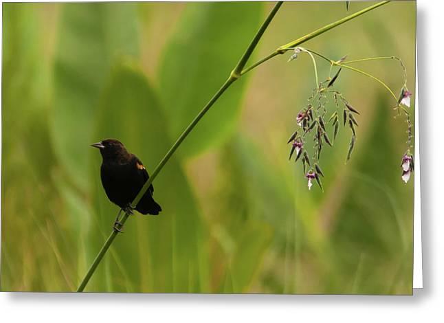 Red-winged Blackbird On Alligator Flag Greeting Card