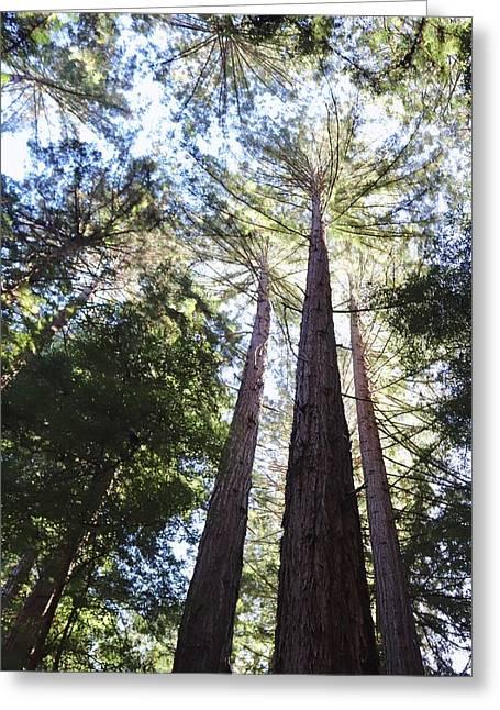 Redwoods, Blue Sky Greeting Card