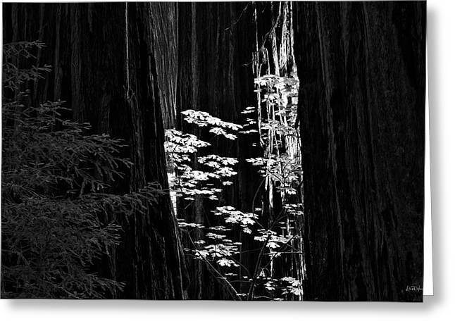 Redwoods Light And Texture Greeting Card by Leland D Howard