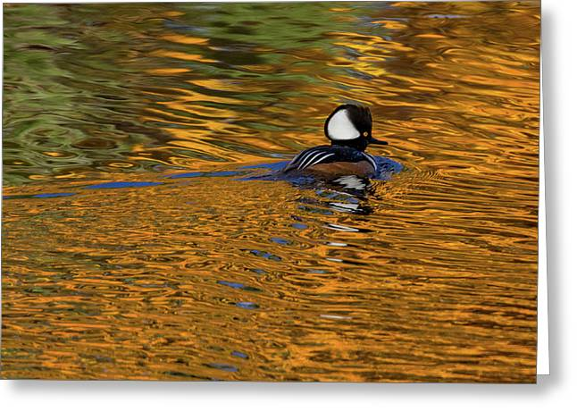 Greeting Card featuring the photograph Reflecting With Hooded Merganser by Darryl Hendricks