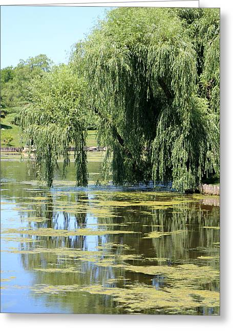 Reflections From Mother Willow Greeting Card