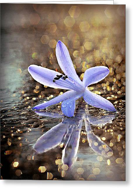 Greeting Card featuring the photograph Reflections Of Joy by Michelle Wermuth
