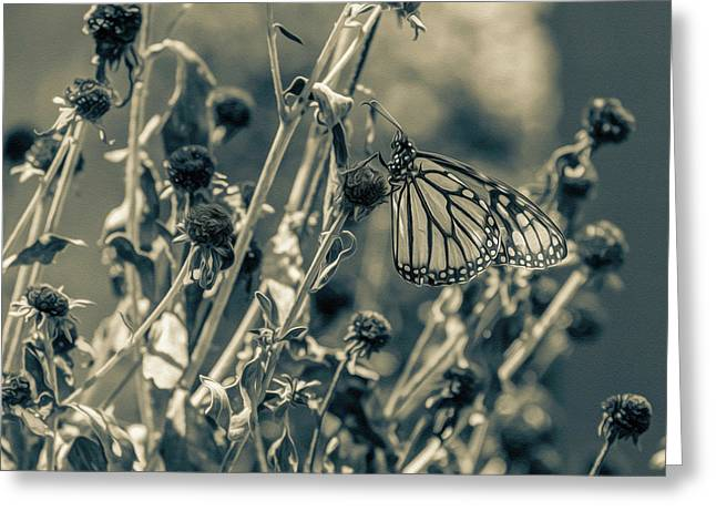 Resting Butterfly Bw Greeting Card