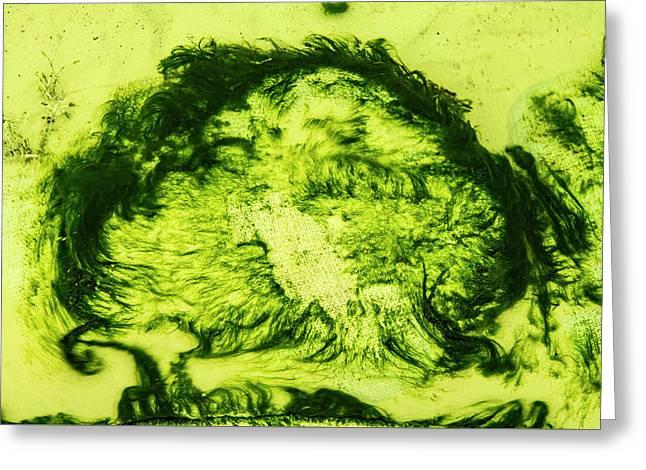 Rhapsody In Green Greeting Card