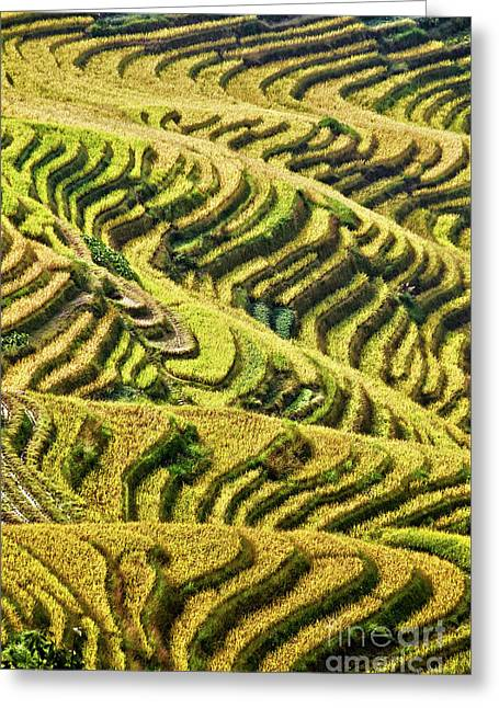 Rice Terraces In China Greeting Card