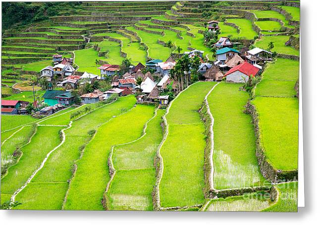 Rice Terraces In The Philippines. The Greeting Card