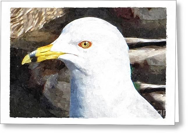 Ringbilled Gull Portrait Greeting Card