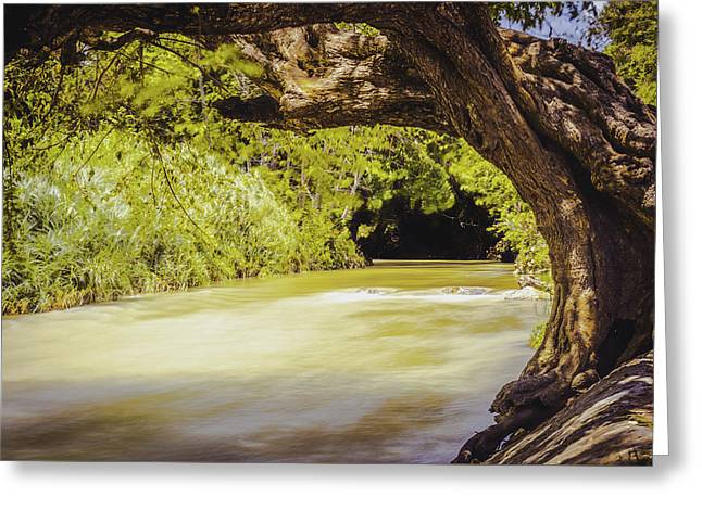 River Banks In Trelawny Jamaica Greeting Card