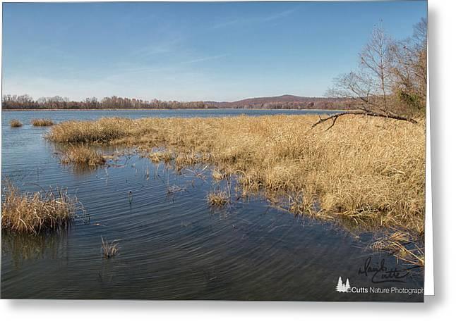 River Grass Greeting Card