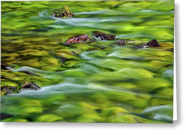 River Moss Greeting Card by Leland D Howard