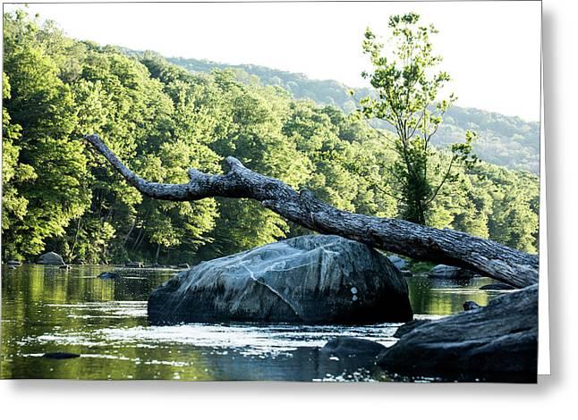 River Tree Greeting Card