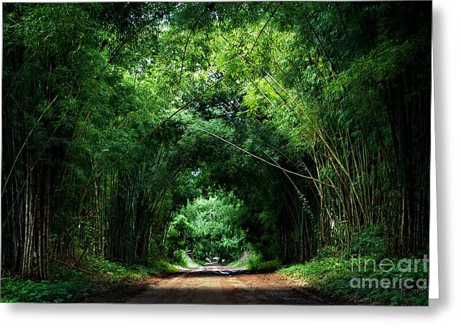 Road With Bamboo Greeting Card