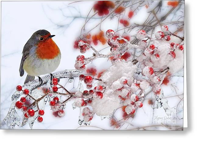 Robin And Berries Greeting Card