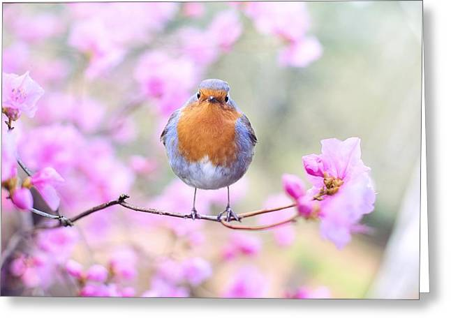 Robin On Pink Flowers Greeting Card