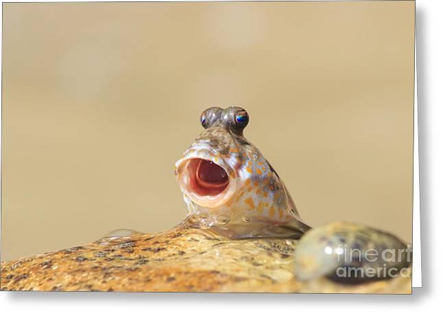 Rockskipper Fish - A Species Of Greeting Card