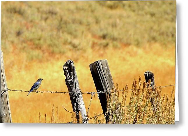 Rocky Mountain Blue Bird Greeting Card
