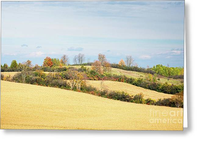 Rolling Hills In Fall Greeting Card