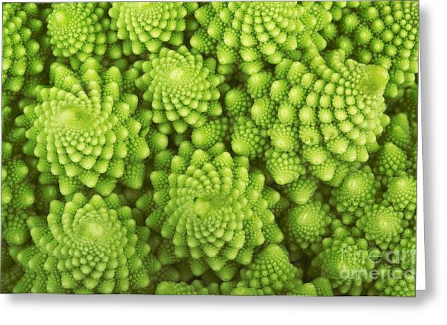 Roman Broccoli Isolated On White Greeting Card