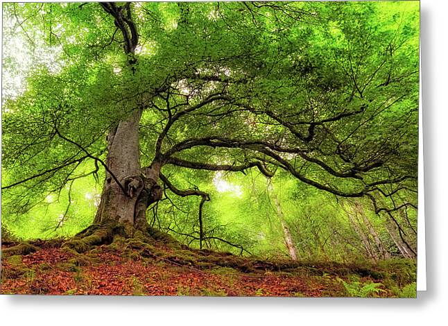 Roots Of Taymouth Estate - Scotland - Beech Tree Greeting Card