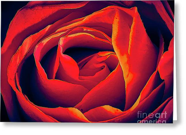 Rose Ablaze Greeting Card
