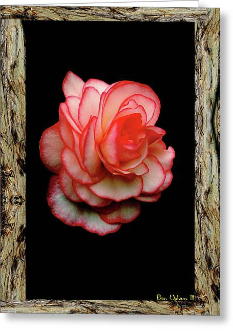 Greeting Card featuring the photograph Rose by Ben Upham III