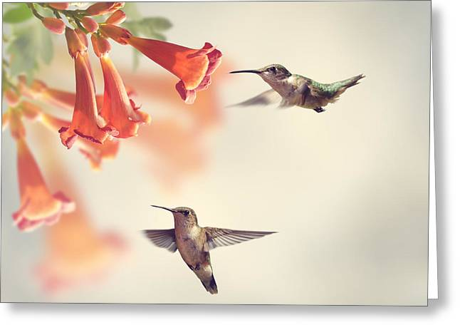 Ruby Throated Hummingbirds Hover Over Greeting Card