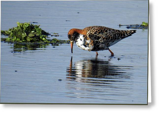 Greeting Card featuring the photograph Ruff 40407 by Rick Veldman
