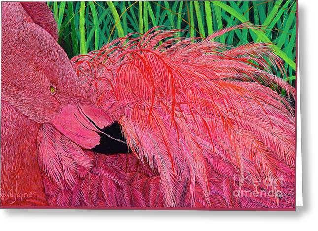 Ruffled Flamingo Greeting Card