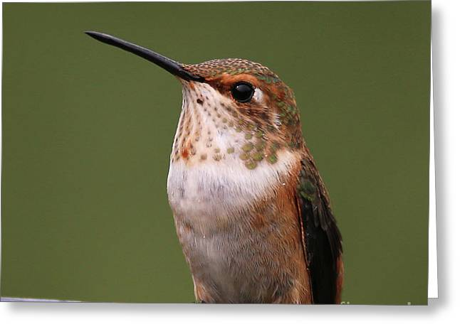 Greeting Card featuring the photograph Rufous Hummingbird by Sue Harper