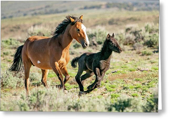 Running Wild Mustangs - Mom And Baby Greeting Card