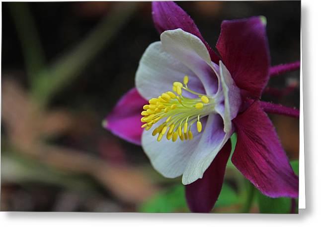 Saffron Stamens I Greeting Card