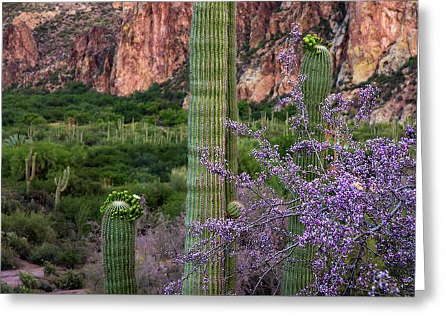 Saguaro Cactus Blooms And Ironwood Close Up Greeting Card by Dave Dilli