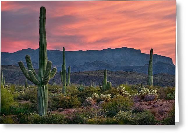 Saguaro Cactus With Arizona Sunset Greeting Card