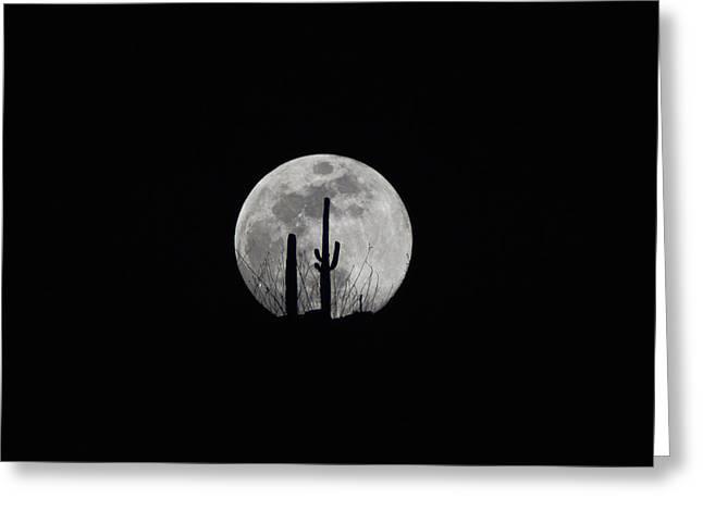 Saguaro Moon Silhouette  Greeting Card