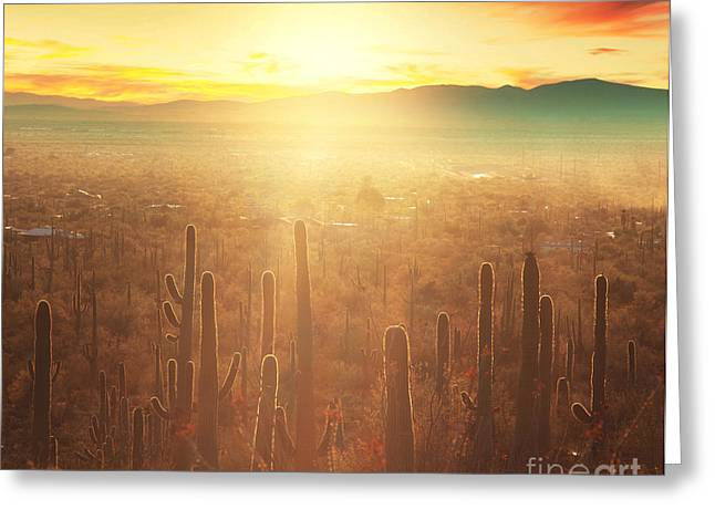Saguaro National Park Greeting Card