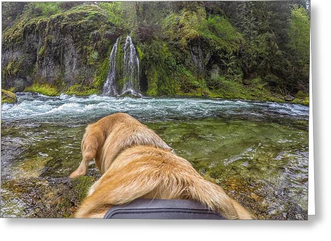 Greeting Card featuring the photograph Salt Creek Falls By Photo Dog Jackson by Matthew Irvin