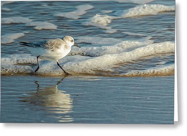 Sanderling At Assateague Island National Seashore Greeting Card