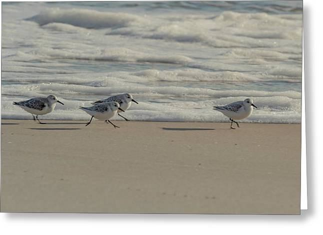 Sanderlings At Assateague Island National Seashore I 1x2 Greeting Card