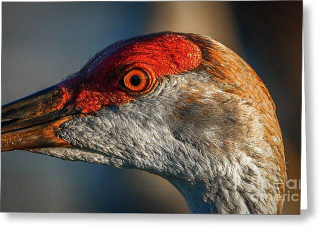 Sandhill Close Up Portrait Greeting Card