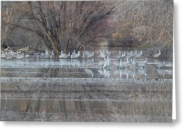 Sandhill Cranes At Waters Edge Greeting Card