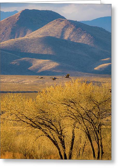 Sandhill Cranes Near The Bosque Greeting Card